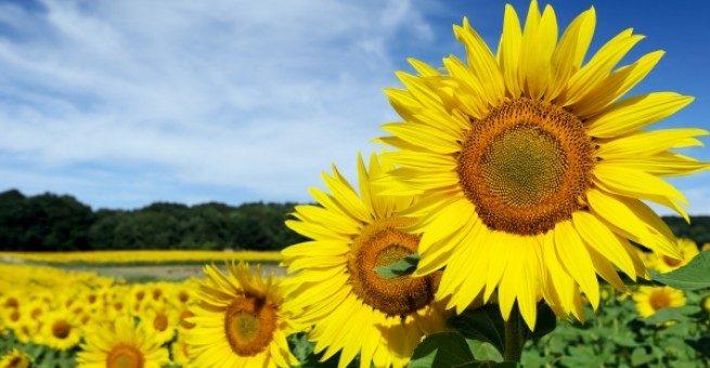 Cultiver la psychologie positive pour développer l'épanouissement de vos ados